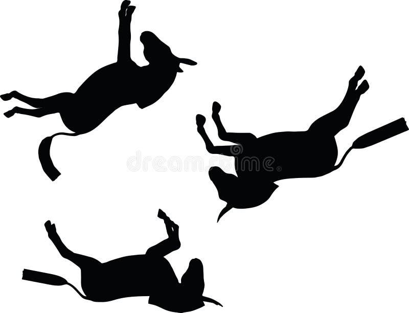 Vector la imagen, silueta del burro, en la actitud descendente, aislada en el fondo blanco libre illustration