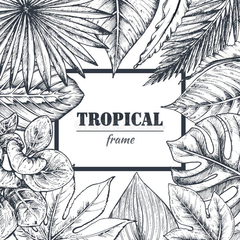 Vector la plantilla con el marco de plantas tropicales dibujadas mano ilustración del vector