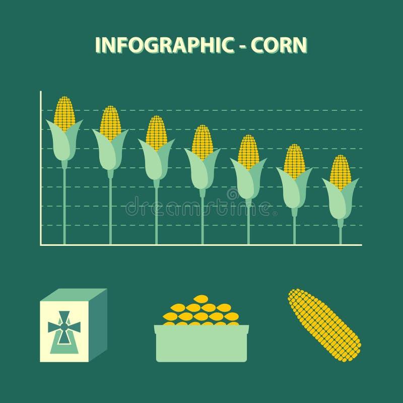 Vector la producción decreciente infographic del maíz - gráfico de la información en diseño plano con el icono de la harina, del  ilustración del vector