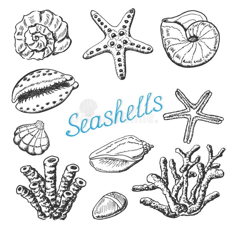 Vector la raccolta delle conchiglie, del corallo e delle stelle marine isolati Illustrazione del disegno della mano illustrazione vettoriale