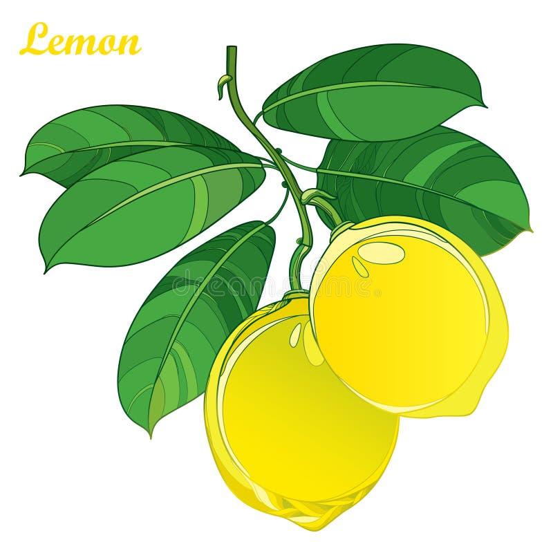 Vector La Rama Con La Fruta Del Limón Del Amarillo Del Esquema Y Las ...