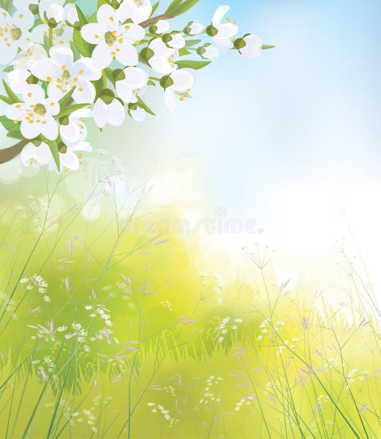 Vector la rama floreciente del manzano, paisaje de la primavera ilustración del vector
