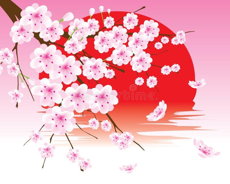 Vector la ramificación del flor de cereza en el sol rojo stock de ilustración