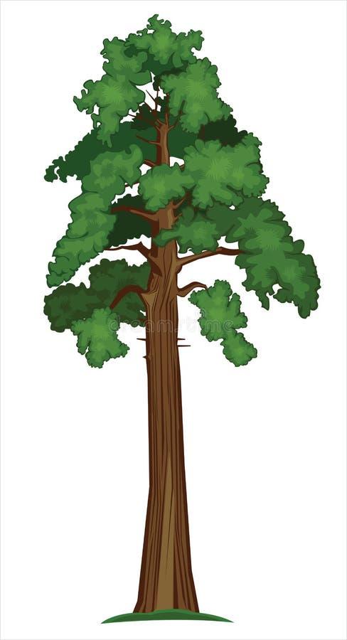 Vector la sequoia illustrazione vettoriale