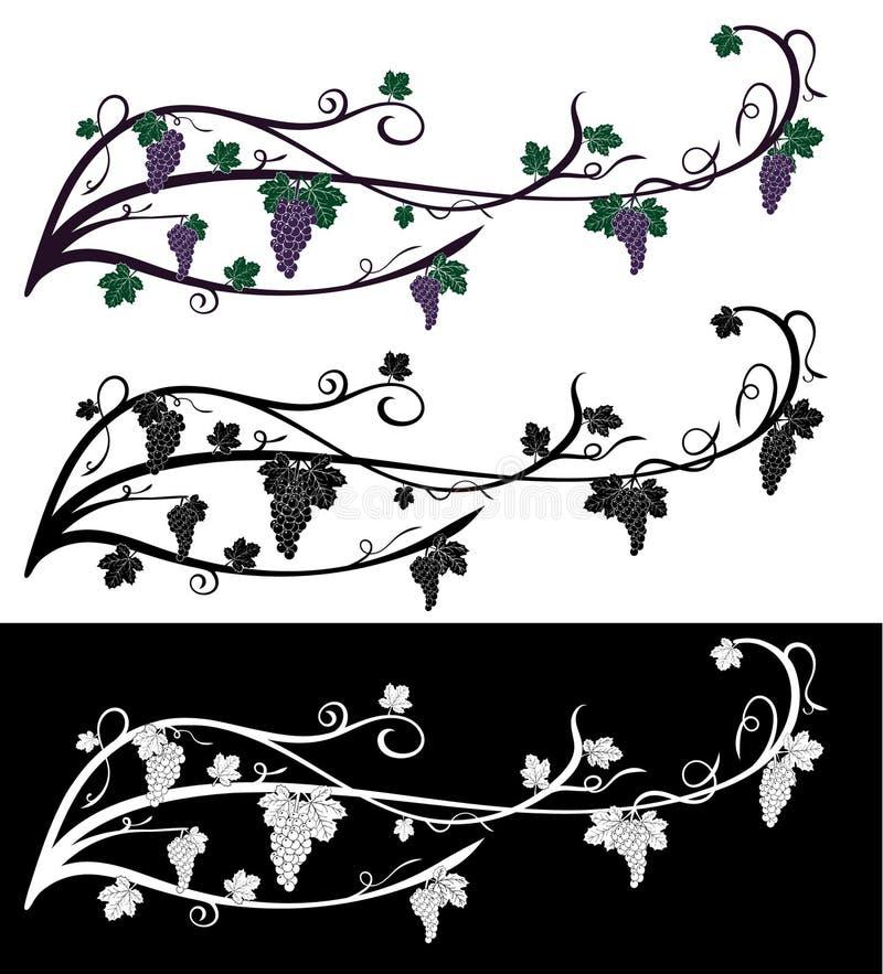 Vector la vid trepador de la uva con las bayas de la uva, hojas Vid de uva de los colores violetas y verdes, aislada en blanco y  fotos de archivo libres de regalías