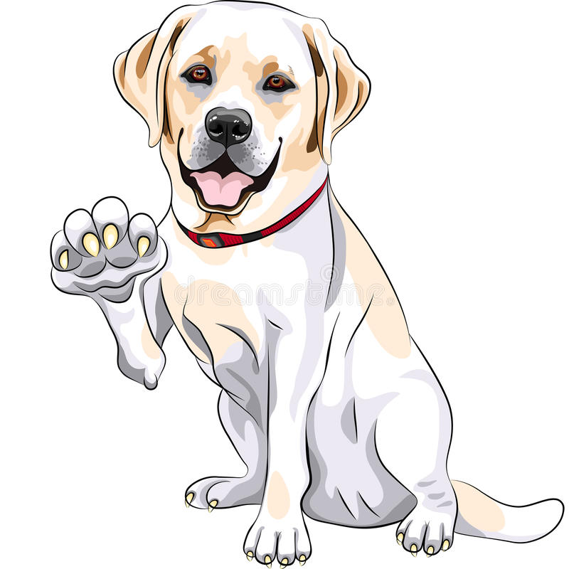 vector Labrador smiles and gives a paw vector illustration