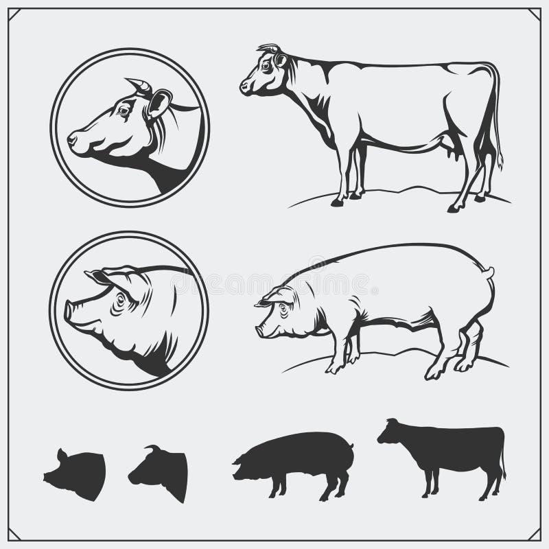Vector las etiquetas de la carne del cerdo y de la carne de vaca y los elementos del diseño Logotipos del negocio del ` s del car libre illustration