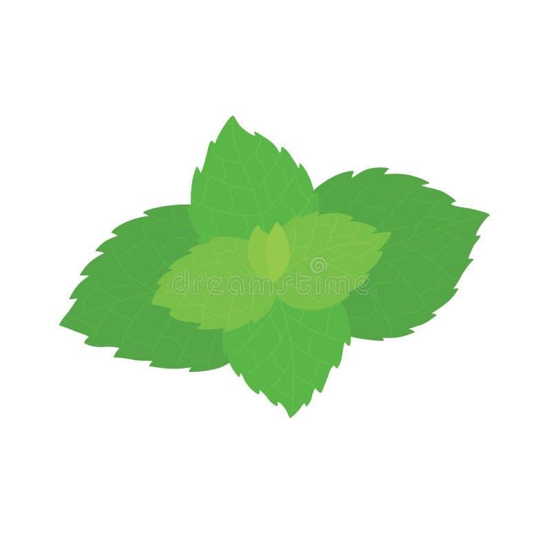 Vector las hojas de menta fresca en un fondo blanco libre illustration