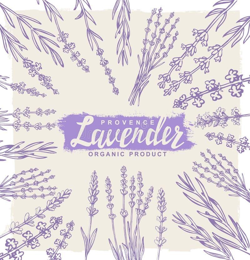 Vector lavender set royalty free illustration