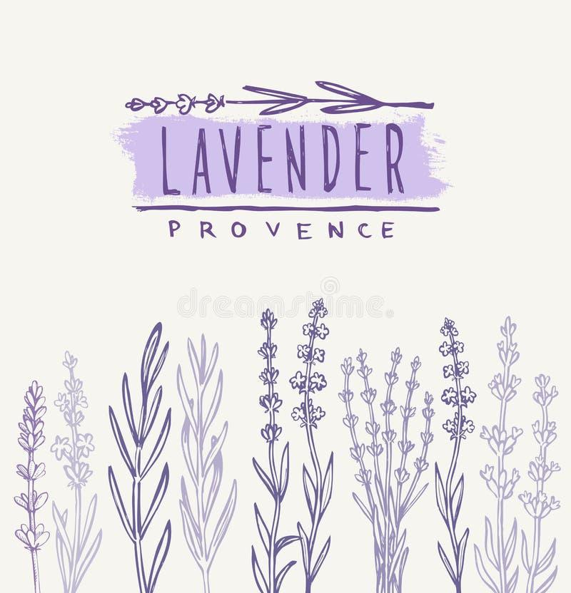 Vector lavender set stock illustration