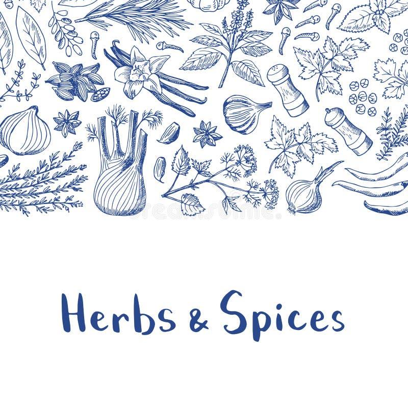 Vector le erbe disegnate a mano ed aromatizzato il fondo con il posto per l'illustrazione del testo illustrazione di stock