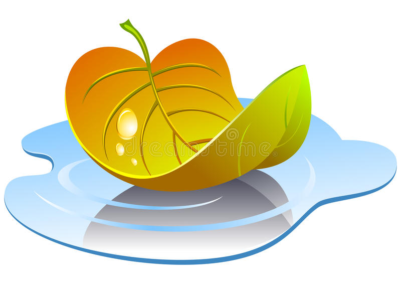 Vector leaf in the puddle. vector illustration