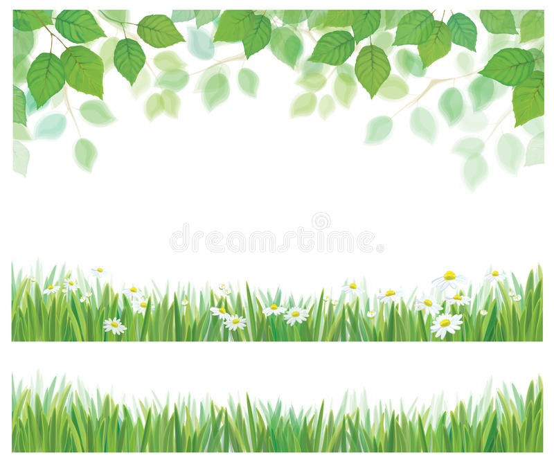 Vector leaves, grass and daisy borders. Spring birch tree leaves, grass and a daisy flowers borders isolated
