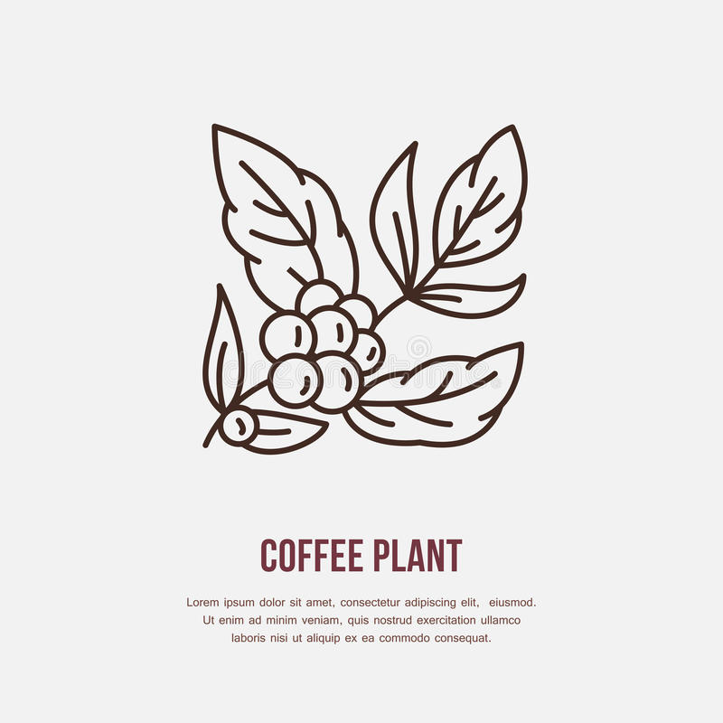 Vector line icon of coffee tree. Coffee plant linear logo. Outline symbol for cafe, bar, shop. Coffeemaking design. Element for sites vector illustration