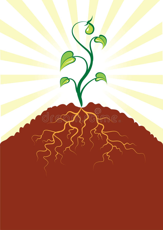 Vector little tree and roots .Seedlings stock image