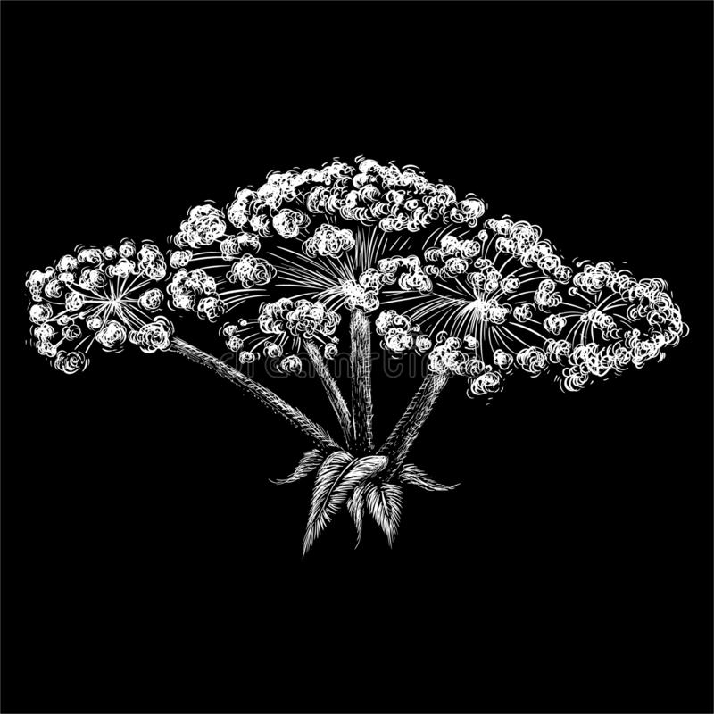 The Vector logo hogweed for tattoo or T-shirt design or outwear.  Cute print style hogweed background. stock illustration