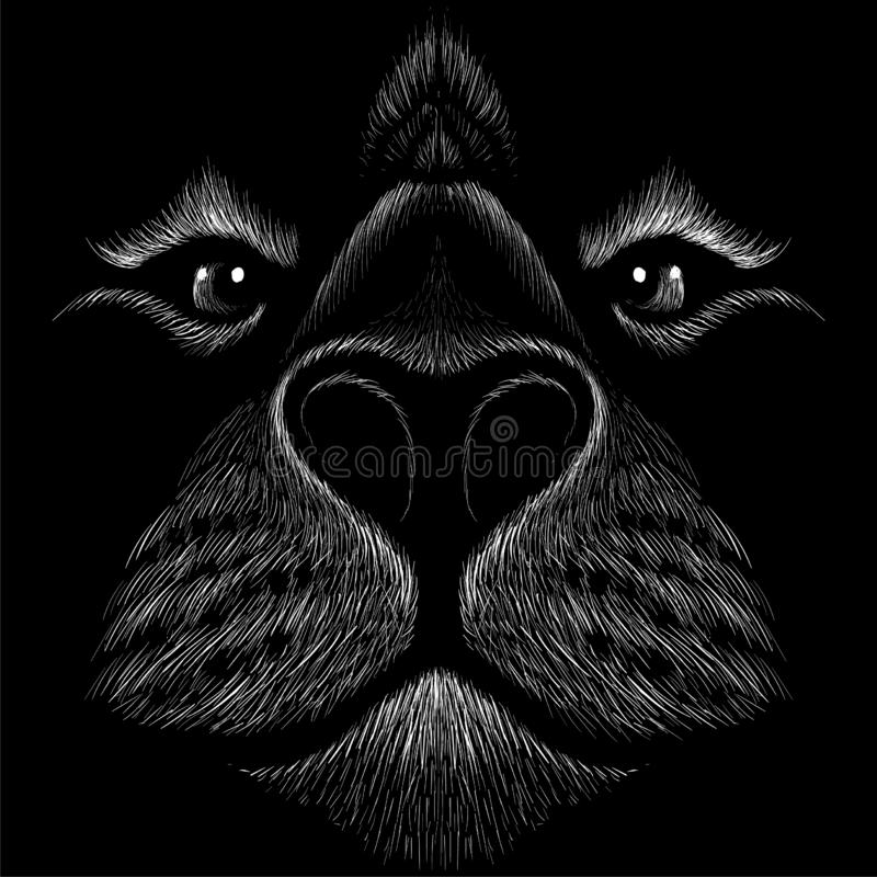 The Vector logo lion for tattoo or T-shirt print design or outwear.  Hunting style lions background. This drawing would be nice to. Make on the black fabric or royalty free stock photo