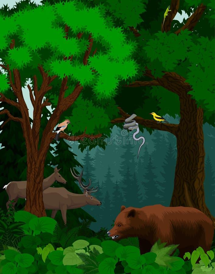 Vector los árboles forestales verdes del arbolado hechos excursionismo con el oso, los ciervos, la serpiente y los pájaros libre illustration