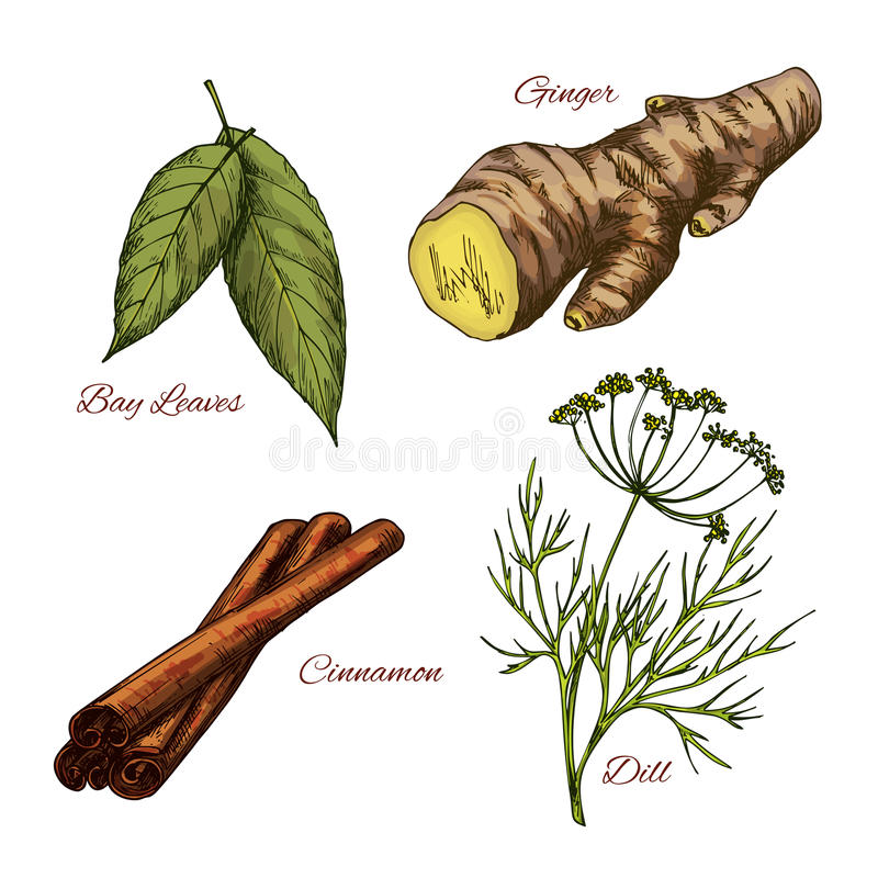 Vector los iconos del bosquejo de los condimentos de la especia y de la hierba ilustración del vector