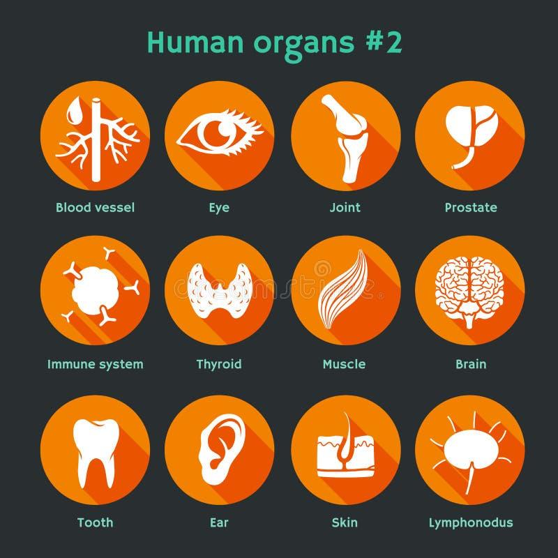 Vector los iconos planos con los órganos humanos y los sistemas libre illustration