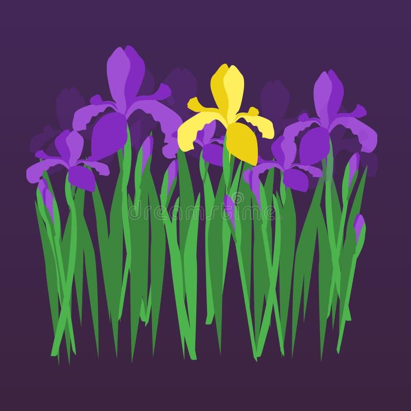 Vector los iris violetas y amarillos en fondo oscuro de la pendiente de la noche Diseño floral para la invitación, tarjeta de fel libre illustration