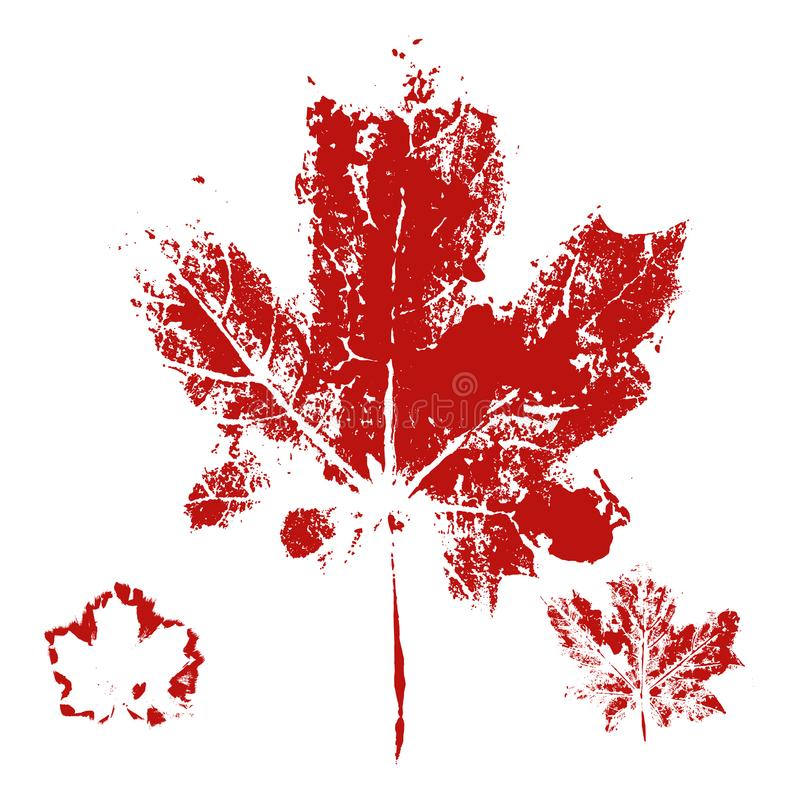 Vector Maple leaf print royalty free illustration