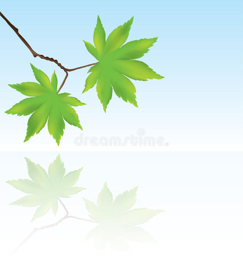 Download Vector Maple Leaves And Reflection In Water Stock Vector - Image: 22488672