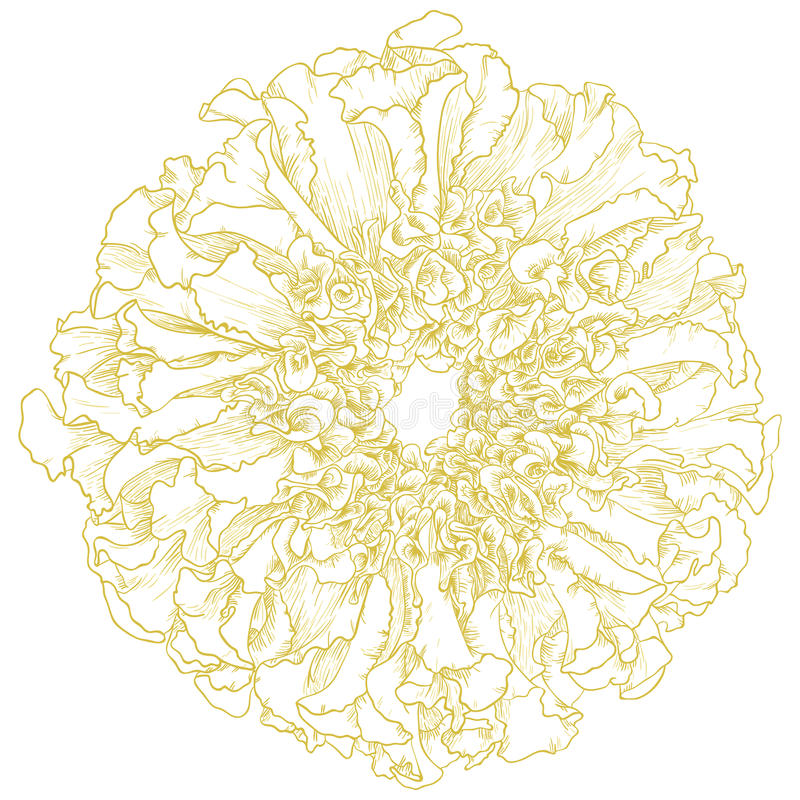 Download Vector Marigold Flower. Stock Photography - Image: 26196022
