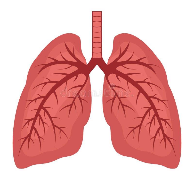 Vector menselijk longen vlak pictogram stock illustratie