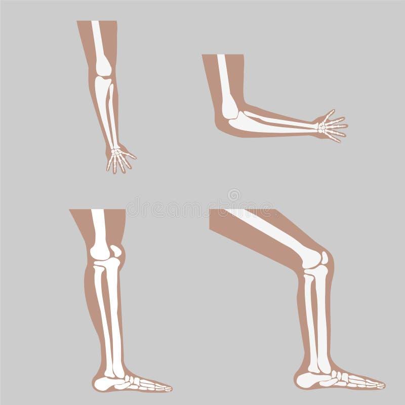Vector menselijke knie vector illustratie