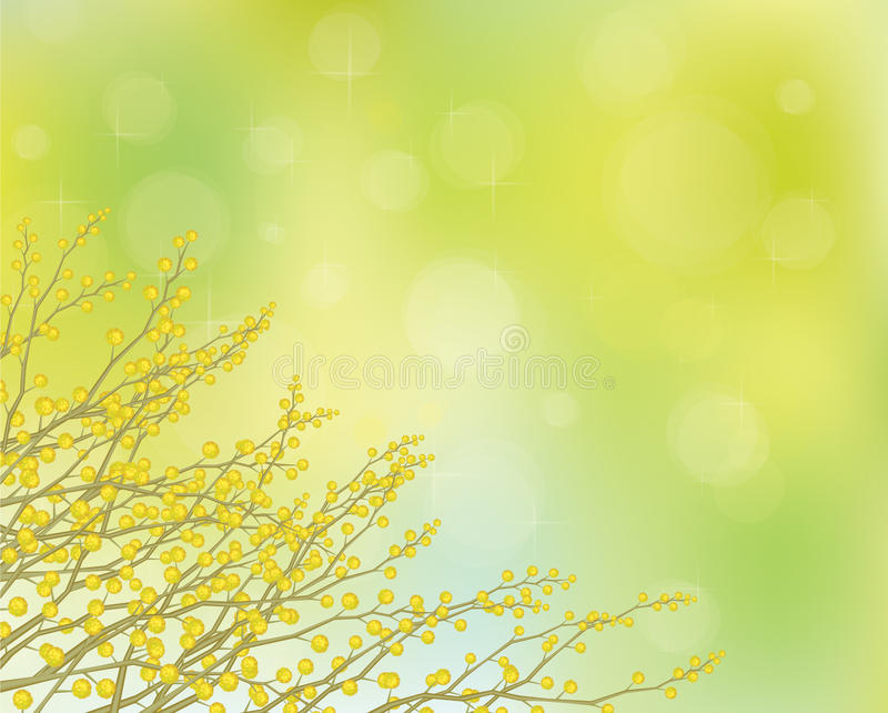 Download Vector Mimosa Flowers On Spring Background. Stock Vector - Image: 36700504