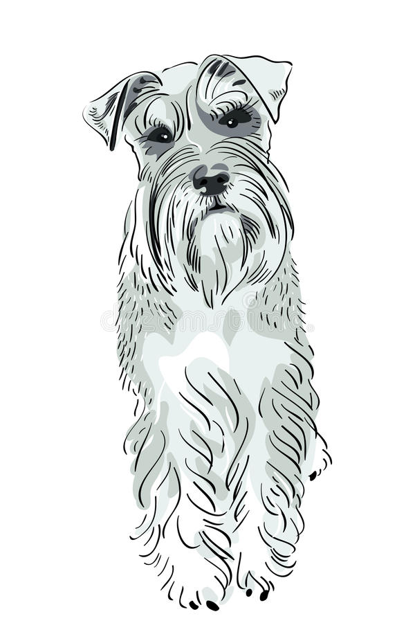 Download Vector Miniature Schnauzer Dog Stock Vector - Image: 20796007