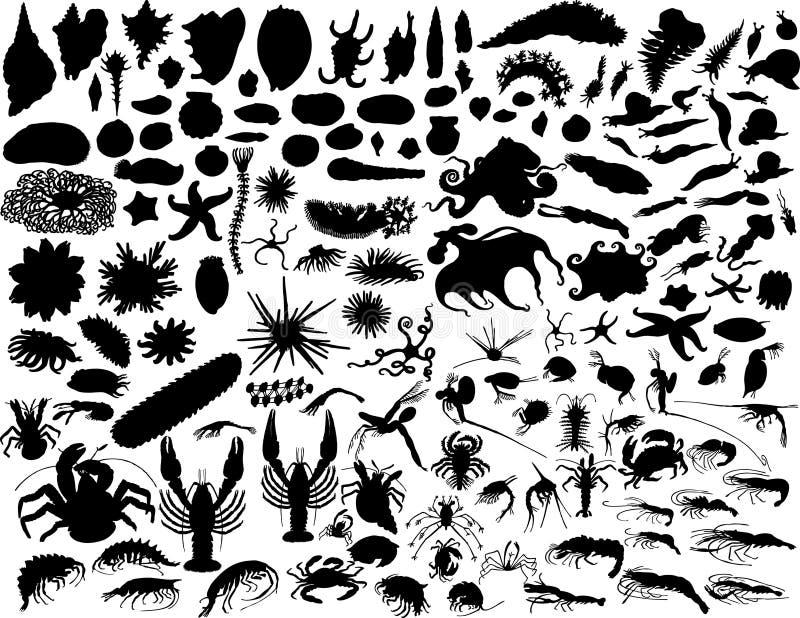 Vector mollusks vector illustration