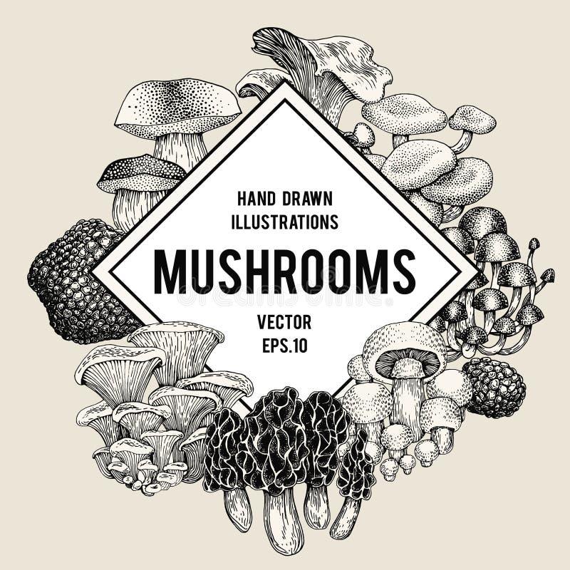 Vector mushroom illustrations hand drawn set of different fungus download vector mushroom illustrations hand drawn set of different fungus kinds vector banner or toneelgroepblik Image collections