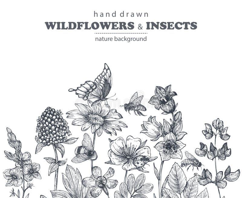 Vector naadloos patroon met hand getrokken kamille, wildflowers, kruiden, vlinders, bij vector illustratie