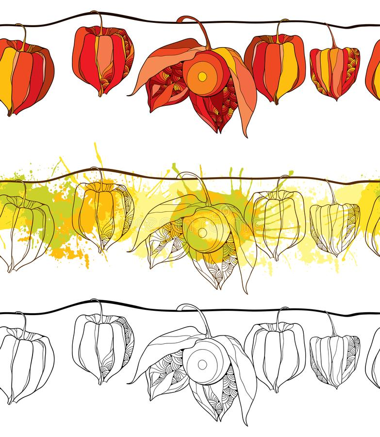 Vector naadloos patroon met overzicht Physalis of Kaapkruisbes of Gemalen die kersenfruit op witte achtergrond wordt geïsoleerd vector illustratie