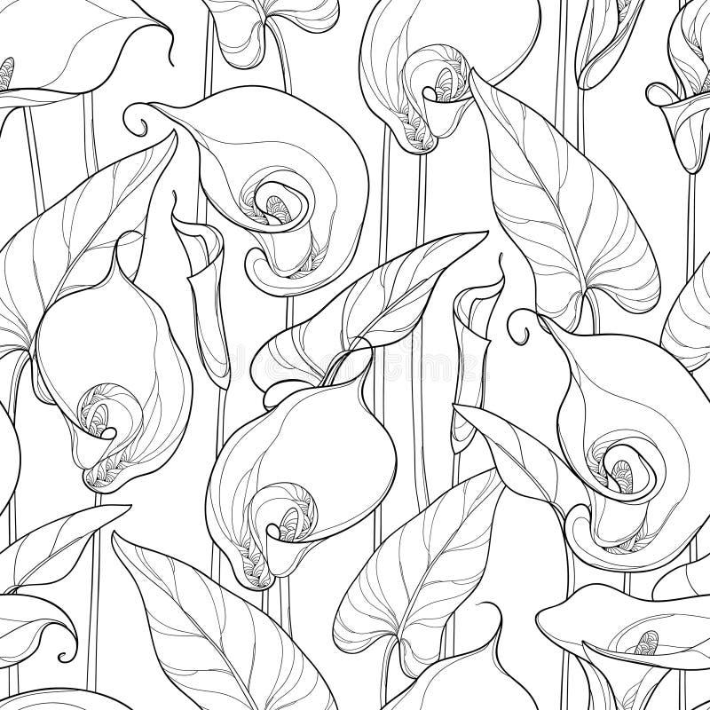 Vector naadloos patroon met overzichtscalla lelie of Zantedeschia stock illustratie