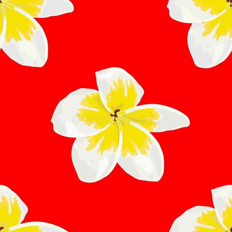 Vector Naadloos van Plumeria-Wit, Frangipini op Rode Achtergrond vector illustratie