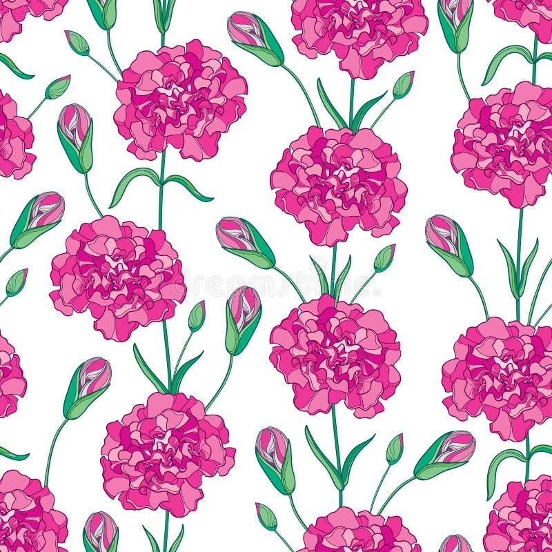 Vector nahtloses Muster mit Entwurf Gartennelke, oder Nelke blüht, knospt und Blätter in rosa und in Grünem auf dem weißen Hinter lizenzfreie abbildung