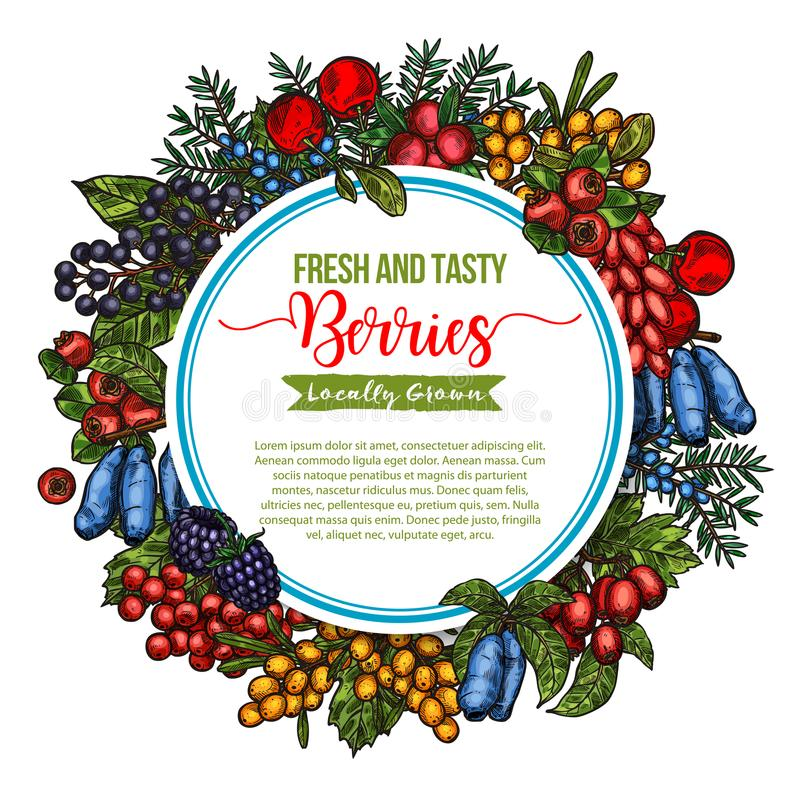 Vector natural fresh tasty berries sketch poster. Berries and berry fruits sketch poster of fresh and tasty organic farm strawberry, raspberry and grape. Berries royalty free illustration