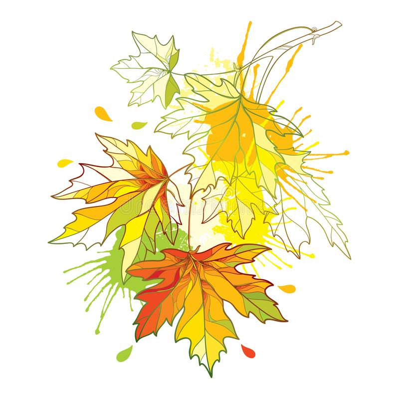 Vector Niederlassung des Entwurfs Acer oder aufwändige Blätter des Ahorns in den gelben und orange Farben und grünen im Pastellfl lizenzfreie abbildung