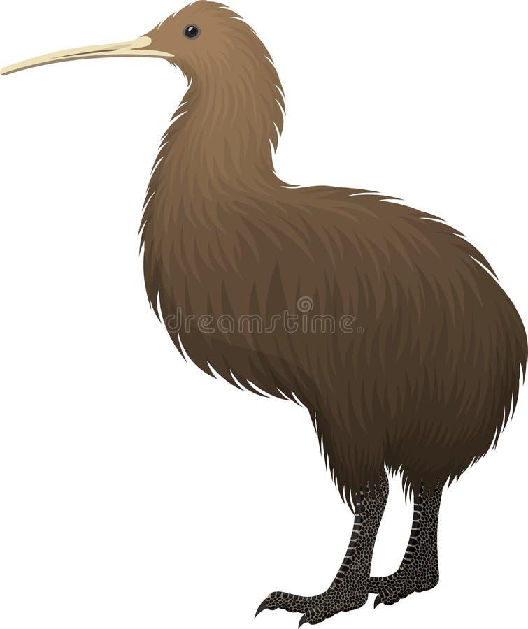 Vector North Island brown kiwi. Illustration royalty free illustration