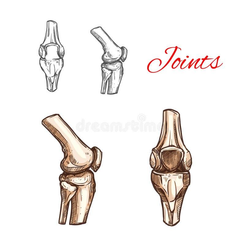 Vector o ícone do esboço de junções humanas do joelho ou de cotovelo ilustração do vetor