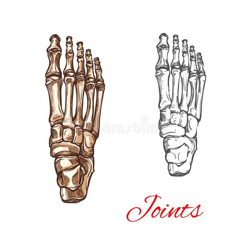 Vector o ícone do esboço dos ossos ou das junções de pé humano ilustração stock