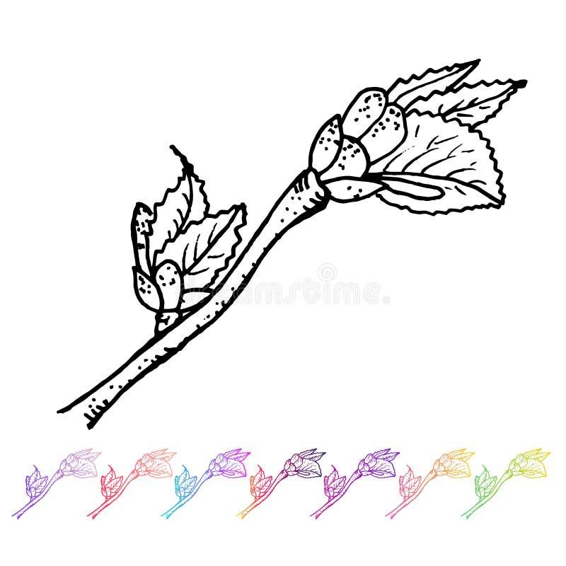 Vector o botão do rim com teste padrão preto das folhas no projeto de planta Flora pintado à mão do jardim da mola Sletch preto i ilustração royalty free