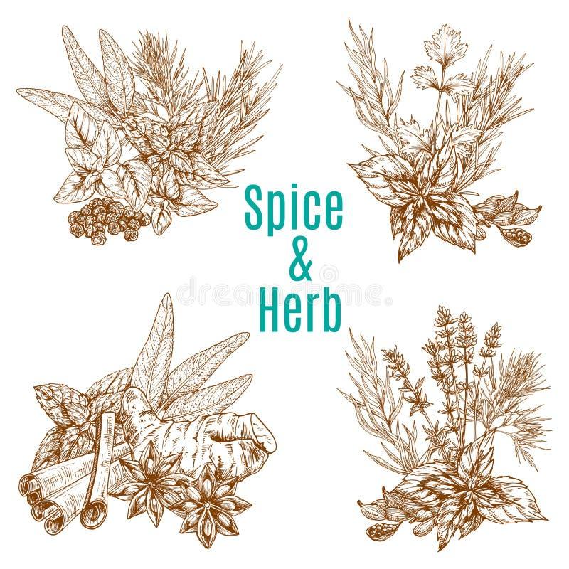 Vector o cartaz de temperos do esboço das especiarias ou das ervas ilustração stock