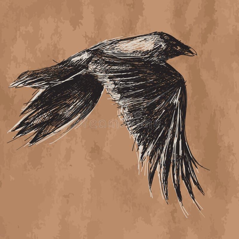 Vector o desenho de voar o corvo africano no ofício ilustração stock