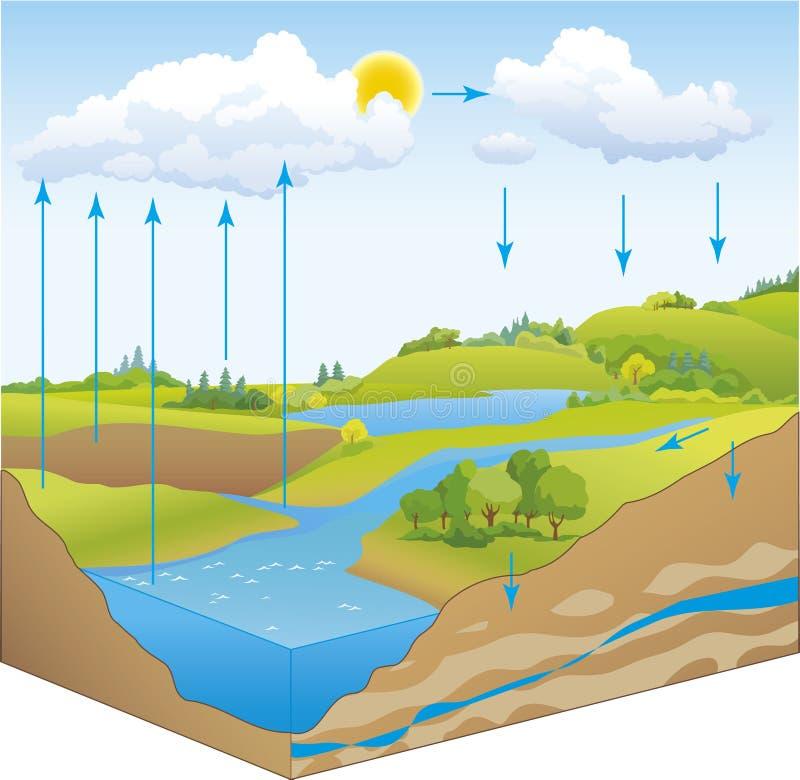 Vector o esquema do ciclo da água na natureza ilustração do vetor