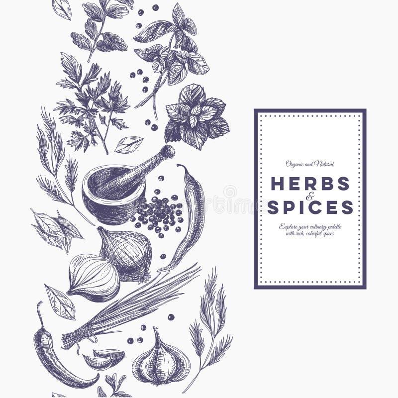 Vector o fundo com as ervas e as especiarias tiradas mão ilustração royalty free