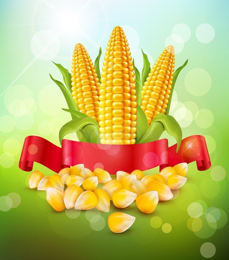 Vector o fundo com grões e espigas do milho e da fita vermelha ilustração do vetor